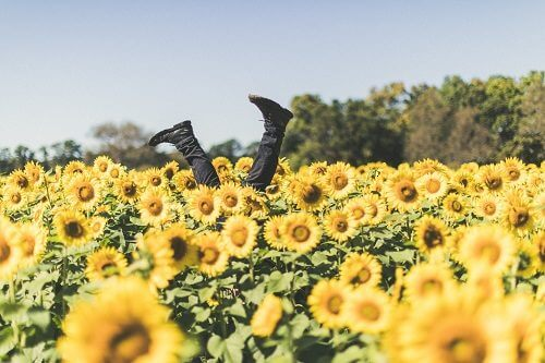 A mans feet sticking up out of a sunflower field.